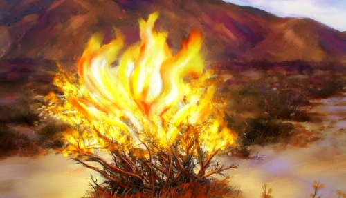 burning-bush-610x351