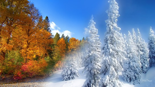6361398353919645911888826154_fall-to-winter-254227